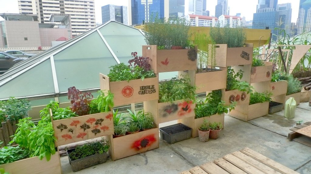 urban rooftop farms in singapore the tender gardener. Black Bedroom Furniture Sets. Home Design Ideas