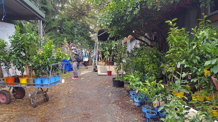 Telopea Mountain Permaculture Nursery