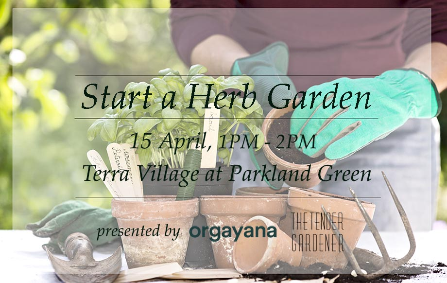 how to start a herb garden singapore