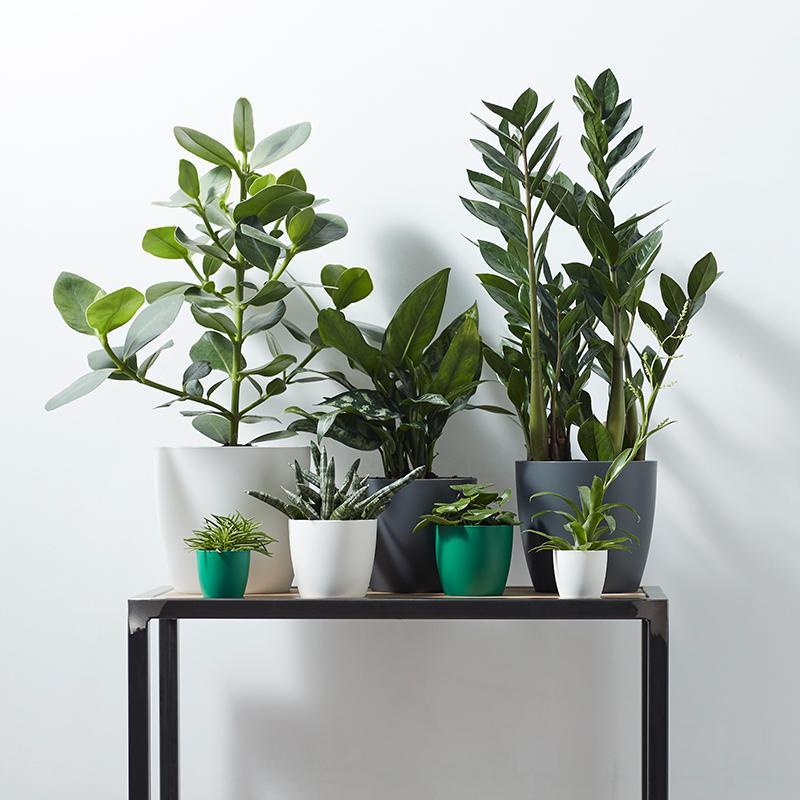 Plant pots Singapore