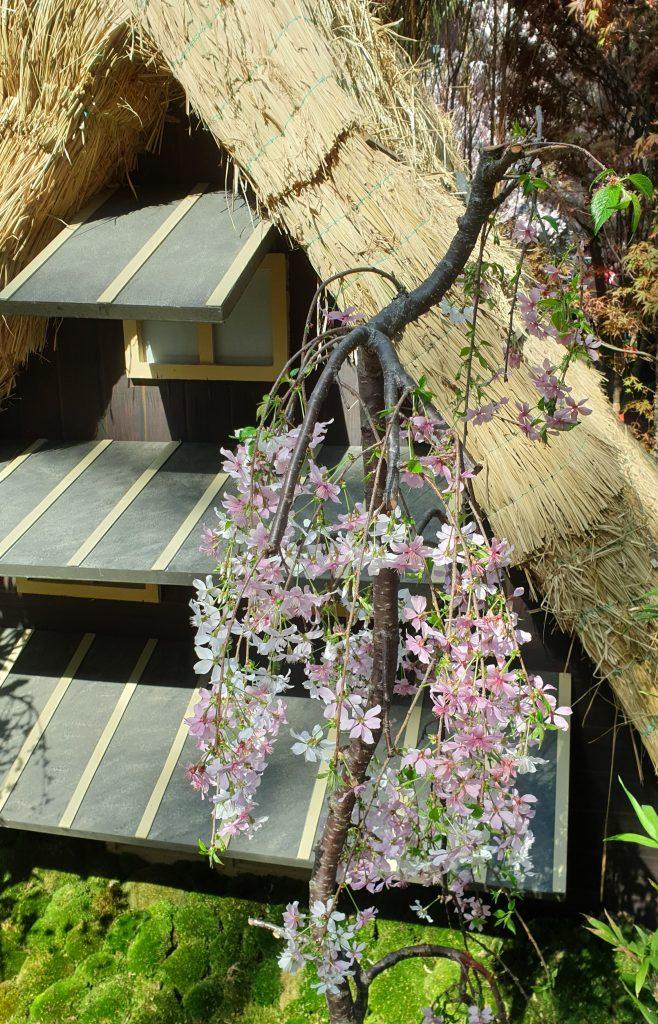 Gassho farmhouse sakura Gardens by the Bay