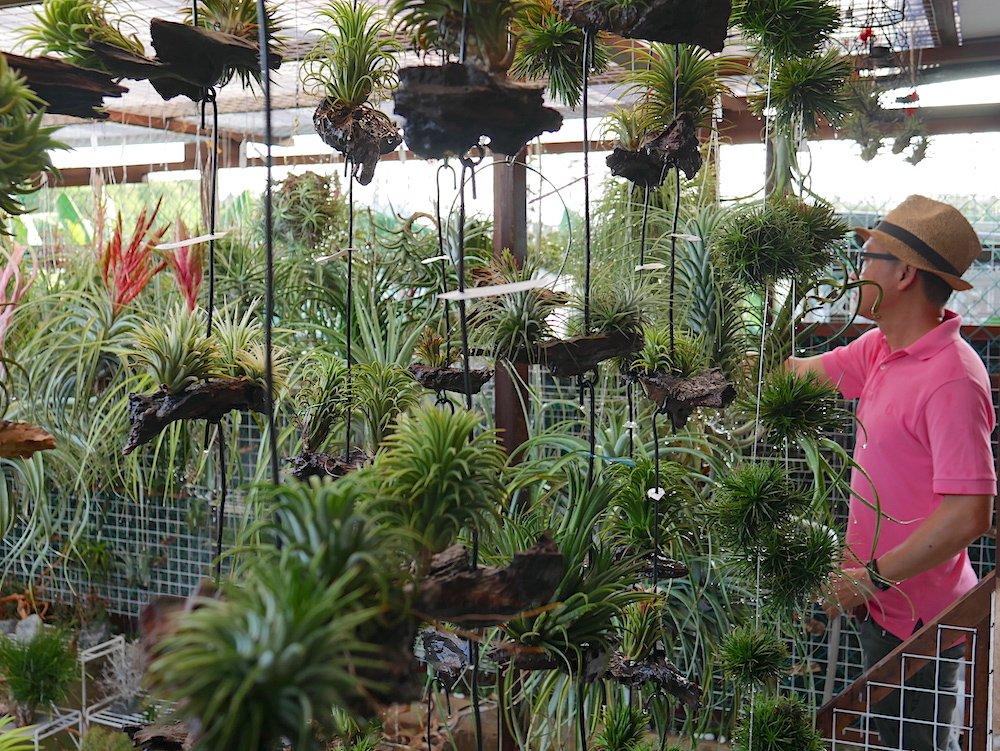 air plant singapore Daniel Goh
