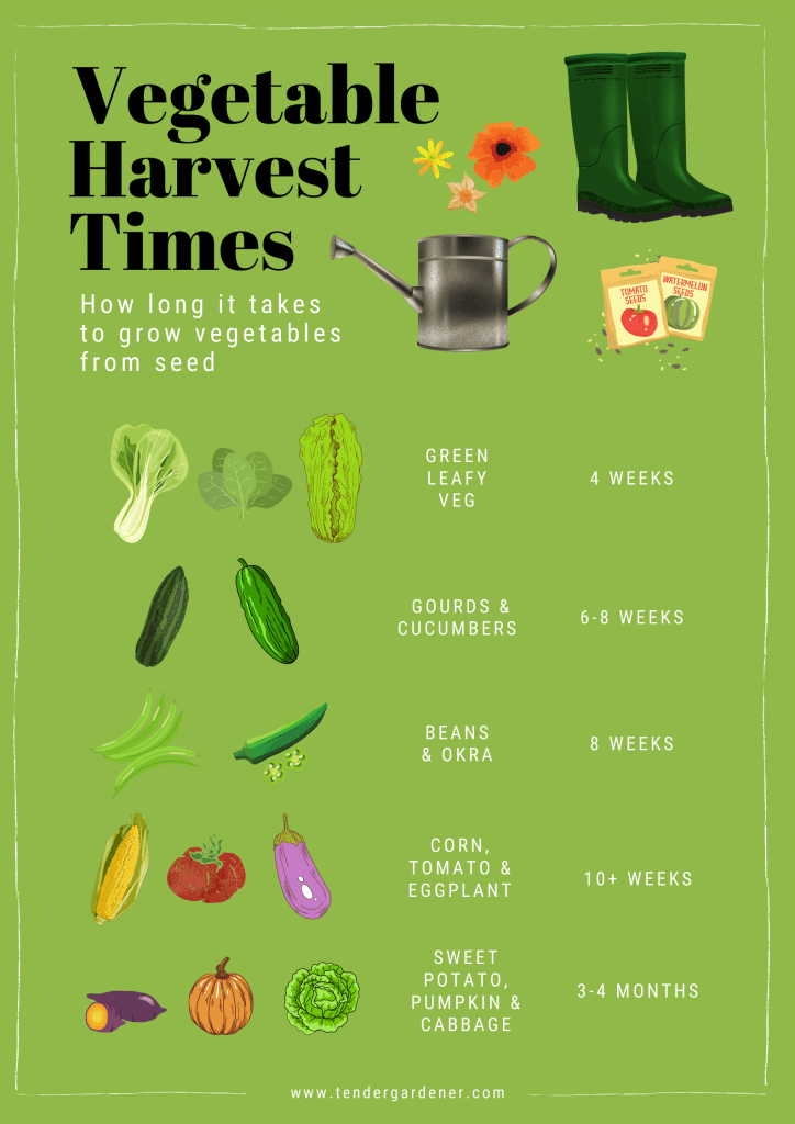 vegetable growing times Singapore