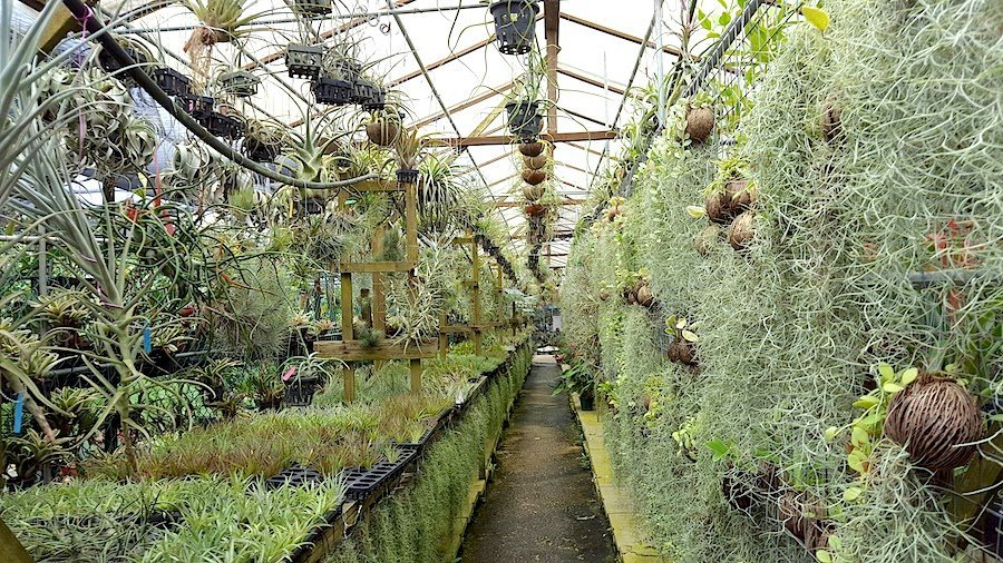 pick a plant singapore