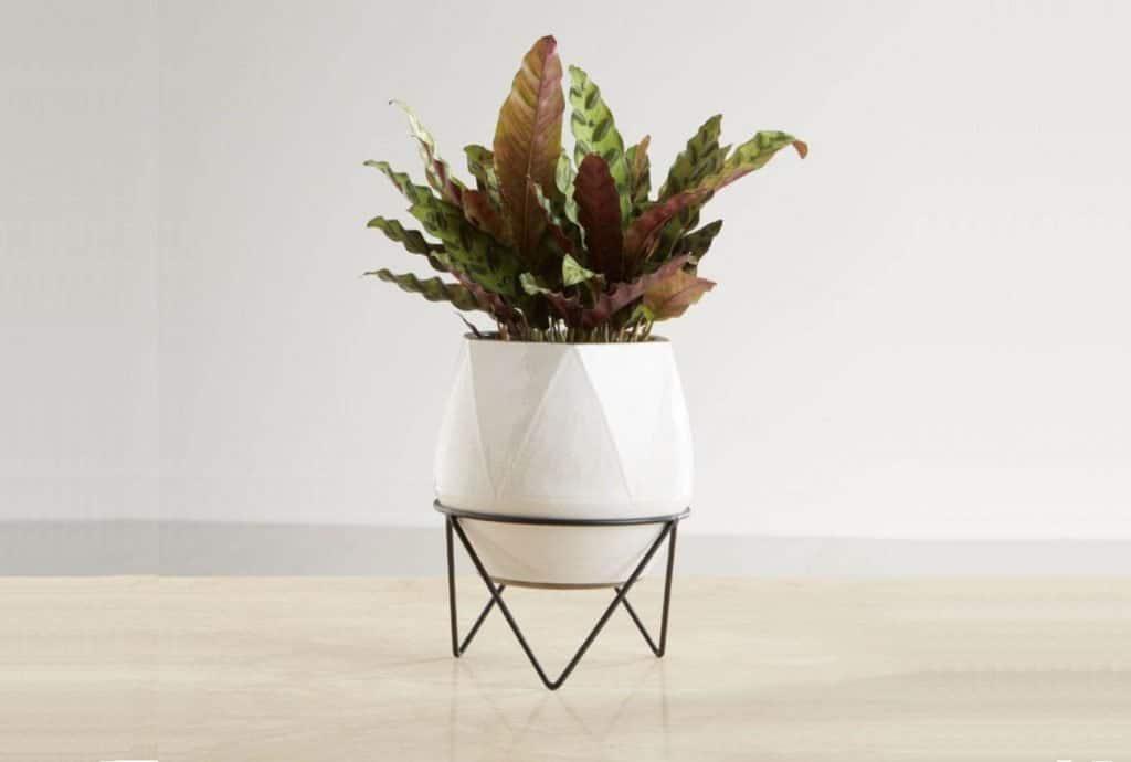 geometric plant stand singapore
