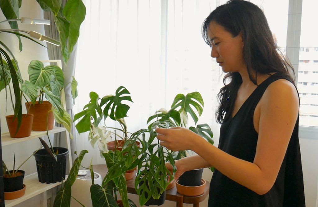 Nicole Seah house plant
