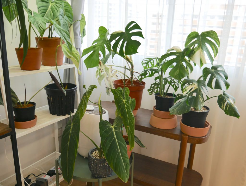 exotic plants singapore