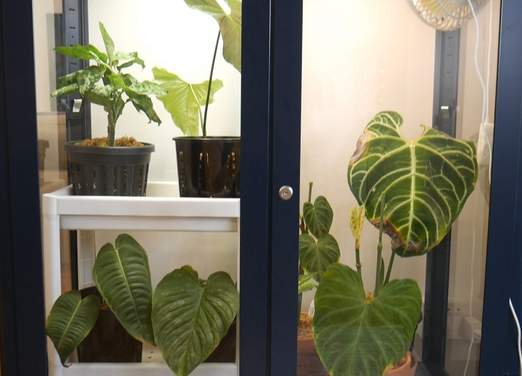 plant cabinet Singapore