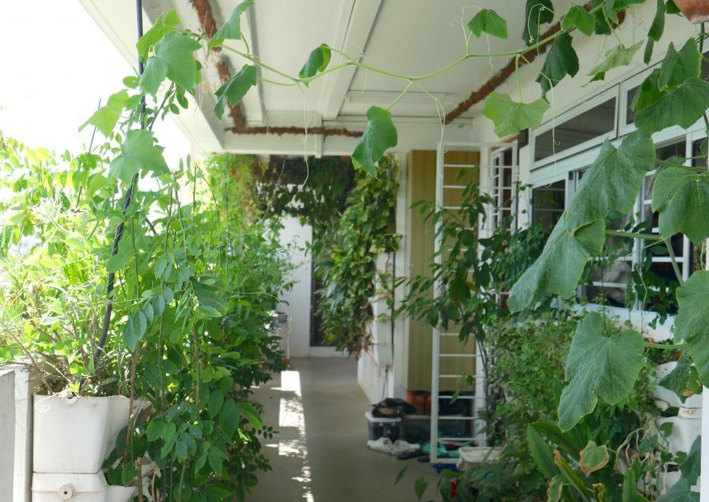 corridor garden singapore