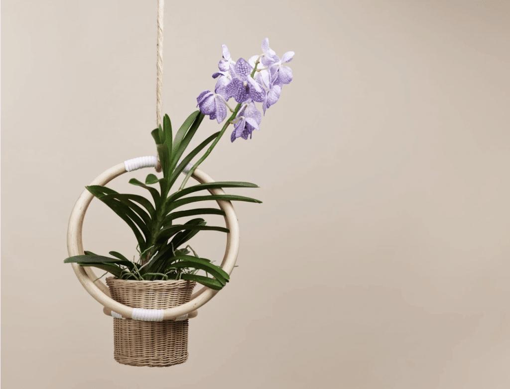 rattan plant hanger