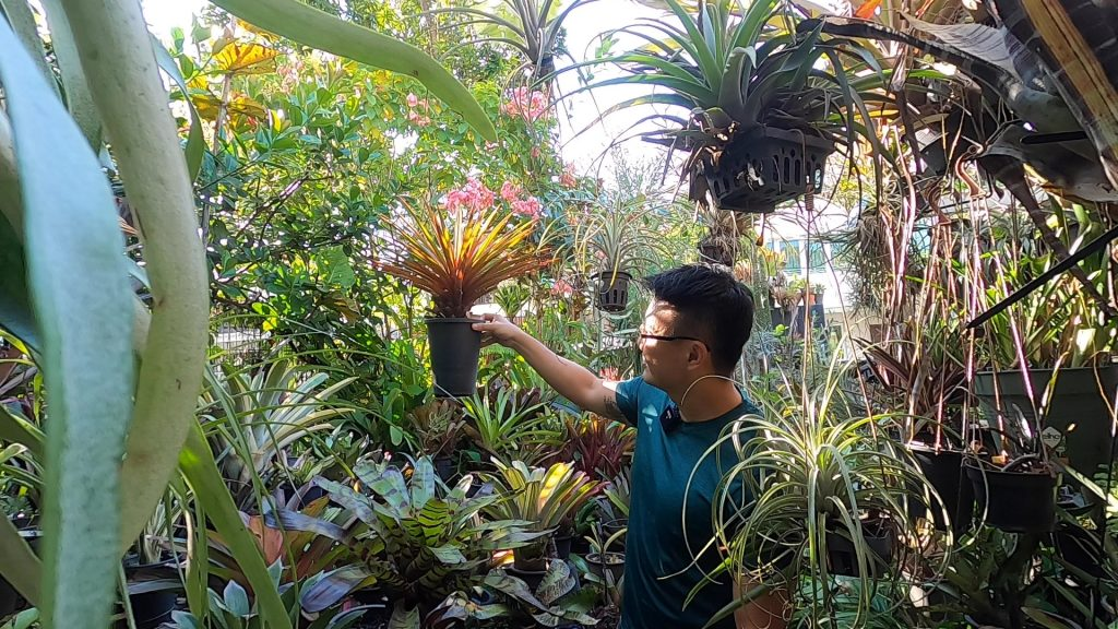 Bromeliad garden Singapore